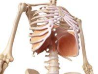 意外と知られていない首と腰の繋がり